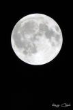 marga luna