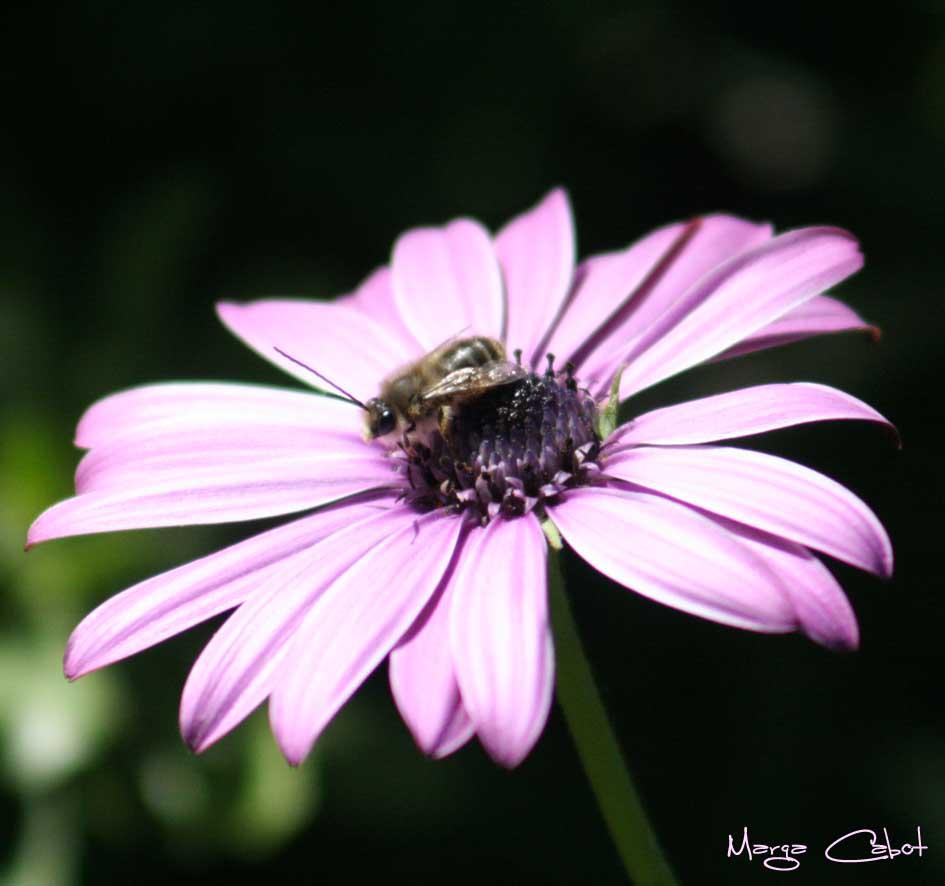marga flor